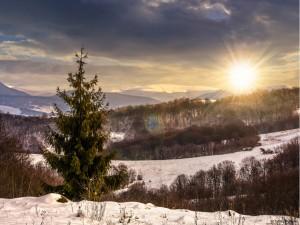 fichte-im-winter